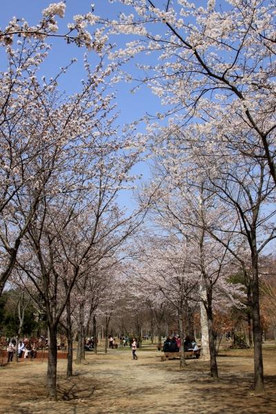 springday